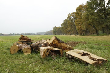 group of logs