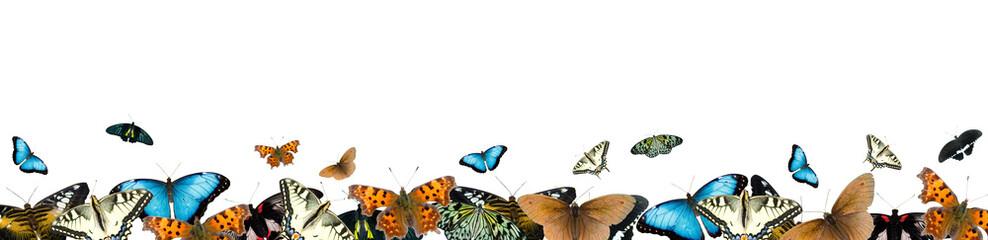 Border of butterflies