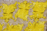 Yellow dyed animal hides spread out to dry at tannery in Fes poster