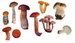 set of edible mushrooms