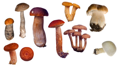 set of edible mushrooms