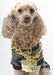 Bling Poodle