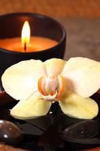 la inflammables et l orchidée