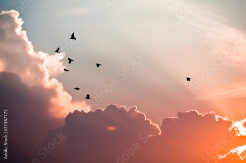 Birds above the clouds - 27367773