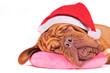 Santa Dreams