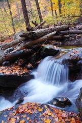 Autumn creek closeup in forest