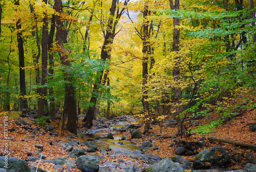 Autumn woods and creek