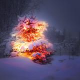 Fototapety winter pine tree