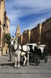 horse driven carriage in Cordoba