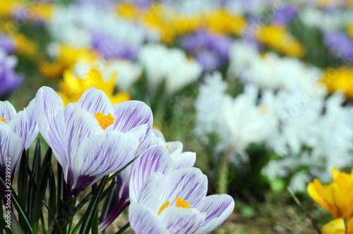 Frühling in der Parkanlage