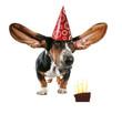 cake dog card