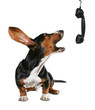 a howling dog on phone