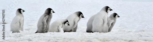 Fotobehang Poolcirkel Emperor Penguin