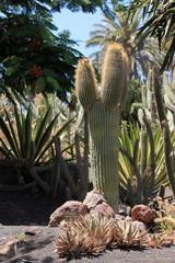 cactus du désert mexicain