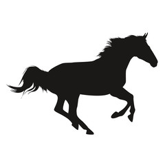 Horse Shadow Wallpaper Silhouette Cheval