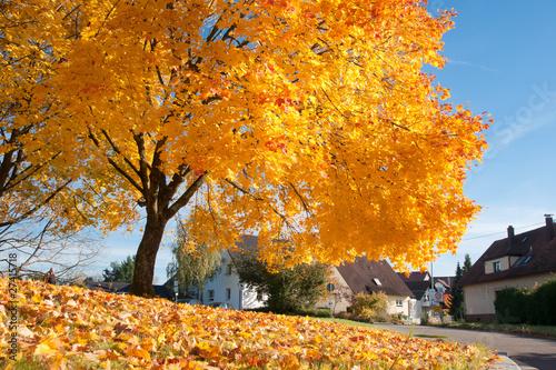 Foto herbststimmung mit ahornbaum