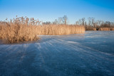 Frozen wetland with golden reed poster