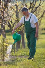 watering orchard/garden - portrait of a senior man gardening in