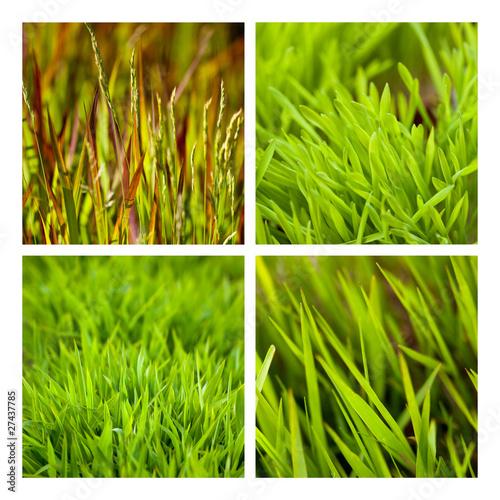 Jardin jardinage herbe pelouse gazon plantation printemps for Pelouse tarif