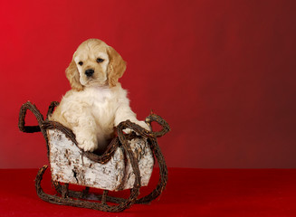 puppy in sleigh