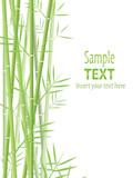 Fototapety bamboo vector background