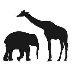 Elephant Giraffe white background Shadow