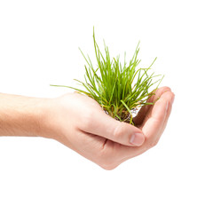Male hand holding green grass isolated on white