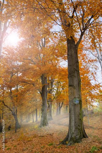 Fototapeten,baum,bäume,frühe,frühe