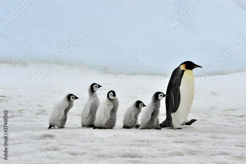 Foto op Canvas Poolcirkel Emperor Penguin
