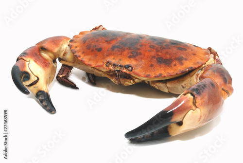 Taurean crab