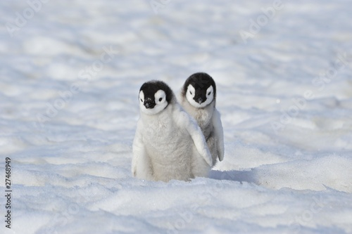 Foto op Canvas Antarctica Emperor Penguin