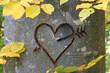 Herz in Baumrinde geschnitzt