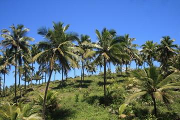 Coqueiros, Itacaré, Bahia, Brasil