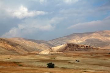 Desert Sinai. Early morning
