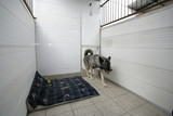 dog in a kennel poster