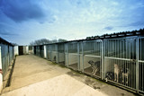 dogs in a kennel poster