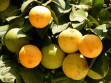 Or Yehuda Oranges November 2010 poster