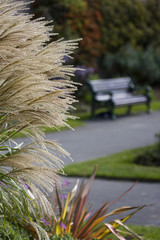 Park Bench with shallow depth of field
