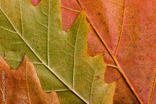 natural autumn leaves