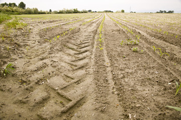 Track of the tire of a tractor in a field sown