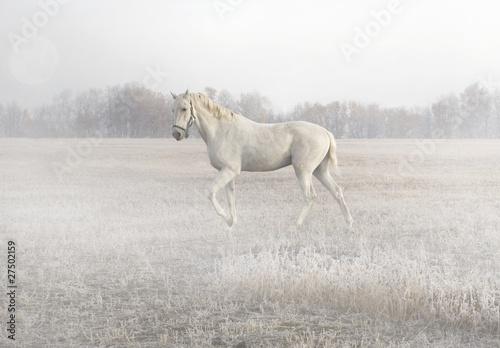 Fototapeten,pferd,nebel,feld,herbst