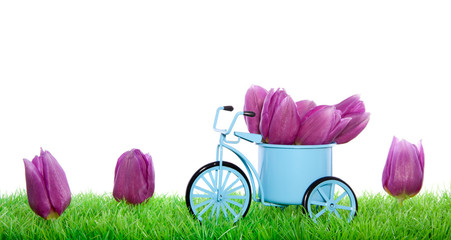 A bicycle decorated with tulips on a green lawn isolated over wh