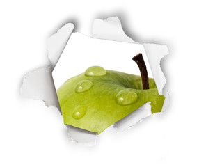 Fresh wet green apple behind torn paper isolated on white