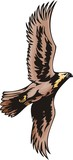 Eagle with brown plumage. Predatory birds. poster