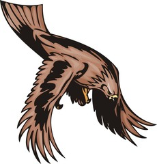 The eagle with brown plumage has noticed the purpose.