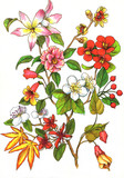 Fototapety drawing, branch of different flowers