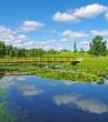 Pond in arboretum.