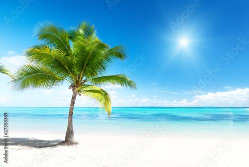 tropikalne-lato