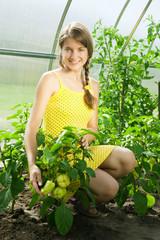 girl picking  green peppe