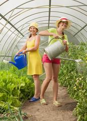 Women watering vegetables